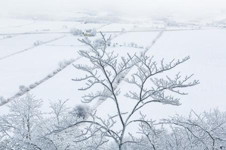 Frosty tree branch with a view of the rural landscape Reklamní fotografie