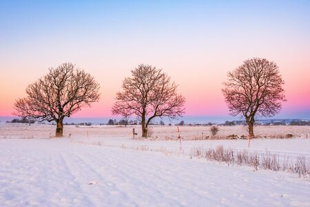 Trees in a beautiful winter sunset 免版税图像