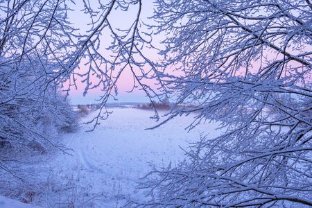 Wintry daybreak with hoarfrost on tree branch