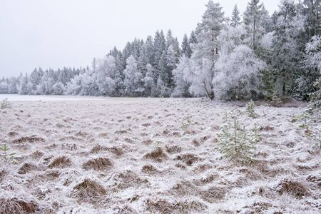 Frozen bog at a lake in the woodland