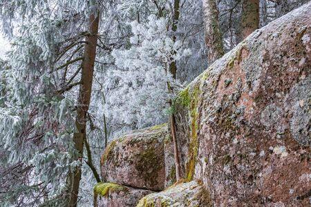 Frosty trees at a crag in the forest