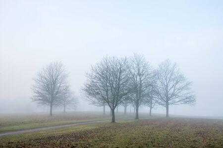 Tree grove in autumn fog on November day