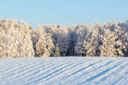 Field with snow and woods in hoarfrost Reklamní fotografie