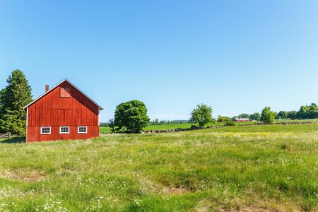 Flowering summer meadow in a rural landscape with a barn