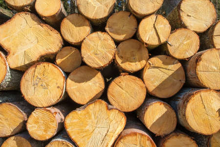 Sawn timber in a pile