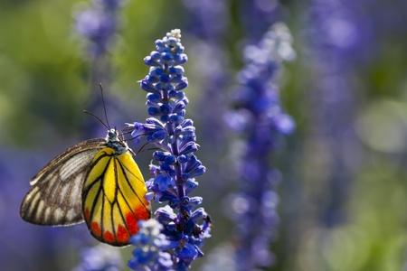 Butterfly Banco de Imagens - 10313205