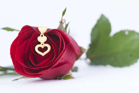 Gold heart pendant and red rose on white background Stock Photo - 11944433