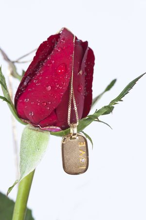 Gold pendant with diamond and red rose on white background Stock Photo - 11944434