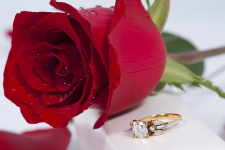 Golden diamond ring and rose photo