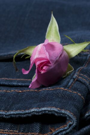 Pink rose in the blue jean pocket photo