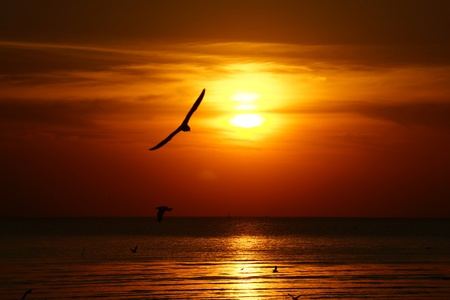 Silhouette of seagull flying over the ocean at sunset photo