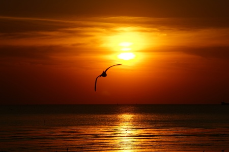 Silhouette of seagull flying over the ocean at sunset Banco de Imagens