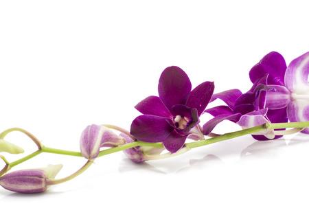 morado: Rama en flor orqu�dea p�rpura est� aislado en el fondo blanco Foto de archivo