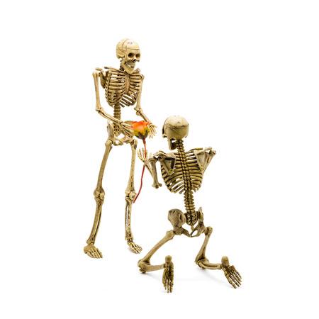 arrodillarse: ¿Quieres casarte conmigo modelo Skeleton arrodillarse hacer la propuesta a su novia y dándole una rosa.