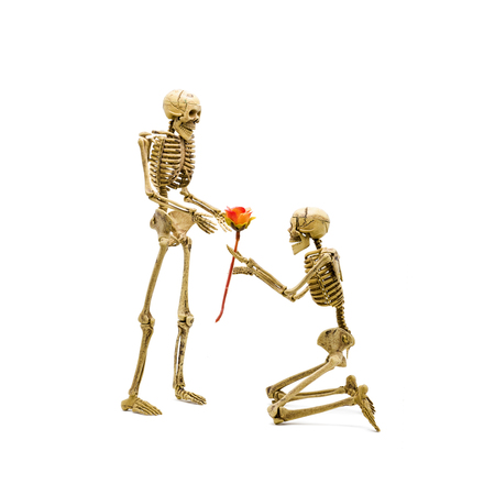 will you marry me: Will you marry me Skeleton model kneel making proposal to his girlfriend and giving a rose.
