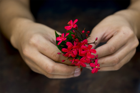 red hand: Still life of hand holding red flower on dark background, warm tone image.