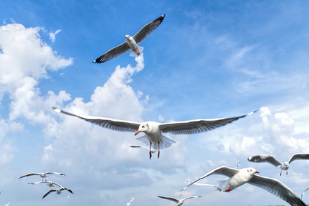 several seagulls flying in a cloudy sky. Banco de Imagens