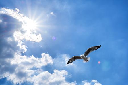 華麗な太陽と青い曇り空を背景に飛んでいるカモメ。