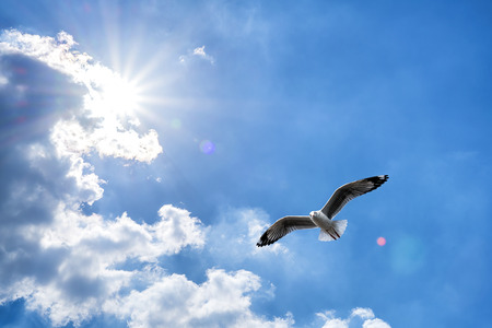 Seagull flying against blue cloudy sky with brilliant sun. Stock Photo