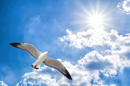 Seagull flying against blue cloudy sky with brilliant sun. Banco de Imagens