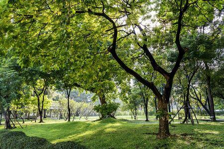 arboles frondosos: Hermoso día soleado en el parque en tiempo de primavera, hierba verde, árboles frondosos