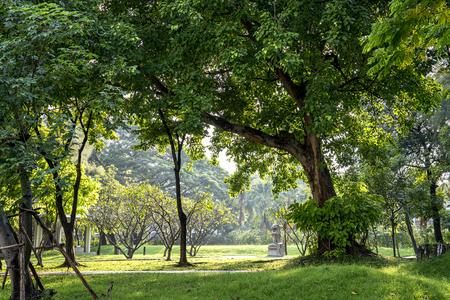 arboles frondosos: Hermoso d�a soleado en el parque en tiempo de primavera, hierba verde, �rboles frondosos