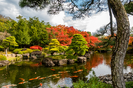 Beautiful landscape in Japanese garden, have many Koi fish swimming in pond and maple tree around with pine tree Stock Photo - 96270861