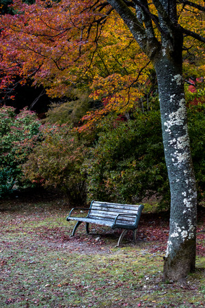 The landscape image of empty seat and colorful leaves background at serene garden, Arashiyama park is one landmark in Kyoto, Japan. The tourists prefer to visit the beauty of nature in autumn season