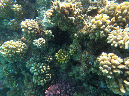 Reef with lots of colorful corals and lots of fish in clear blue water in the Red Sea near Hurgharda, Egypt