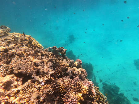 Reef with lots of colorful corals and lots of fish in clear blue water in the Red Sea near Hurgharda, Egypt Archivio Fotografico