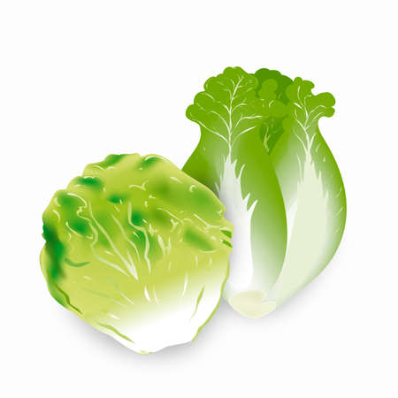 romaine lettuce: An image of romaine lettuce.