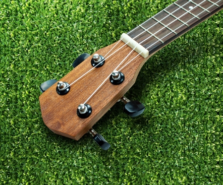 acoustical: Ukulele guitar on lawn background
