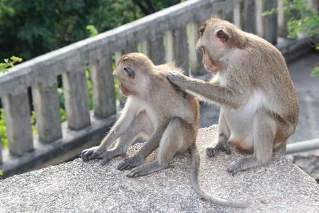 dolorous: Monkey