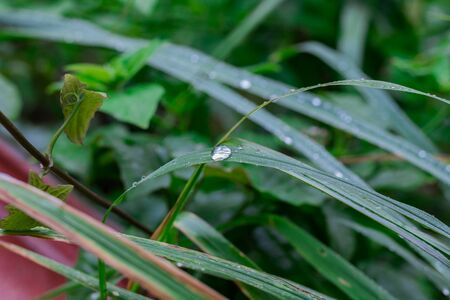 Dew drops on the grass. Stockfoto