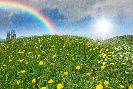a green meadow with dandelion and april weather with sun, rain and a rainbow in the sky photo