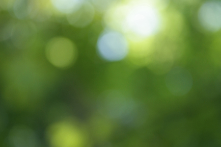 Abstract and natural green background with some light bubbles and lights, blurred Standard-Bild