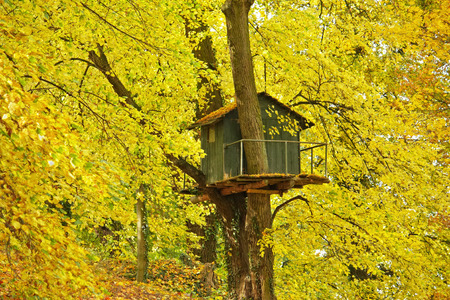 Tree house in autumnal tree with yellow foliage Stock Photo