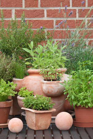 various herbs in pots with decorations Standard-Bild