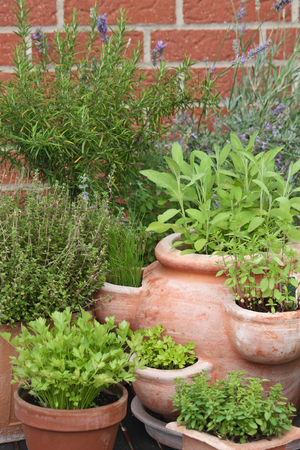 various herbs in pots