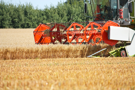 combine harvester at the harvest in the wheat field