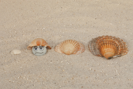 pearl with funny face under seashell in the sand