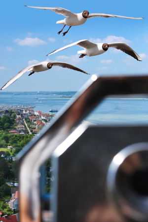 view over coastal landscape with flying seagulls and binocular in foreground Standard-Bild