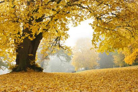 Bench under a golden tree on a foggy day in autumn Standard-Bild