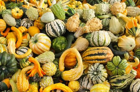 various colorful ornamental gourds Standard-Bild