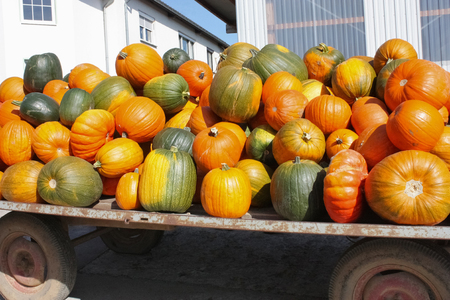 Various colorful pumpkins on a truck trailer