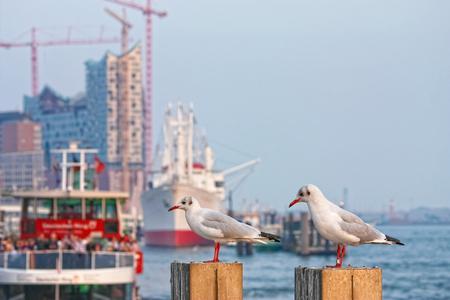 seagulls in the harbor of hamburg