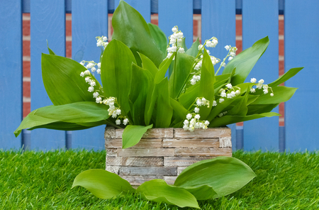 lily of the valley bouquet in a basket in garden