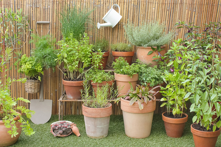 herbs in pots with garden decorations