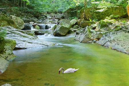 swan floats on river surrounded by trees with waterfall in the background Standard-Bild