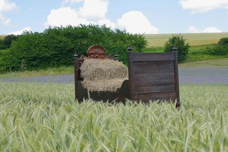 old bed with straw in beautiful summery field landscape Standard-Bild